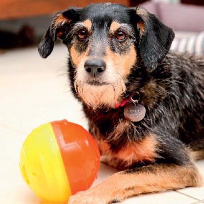Coluna da Estopinha: Cão sem apetite, como assim? | <i>Crédito: iStock/Reprodução