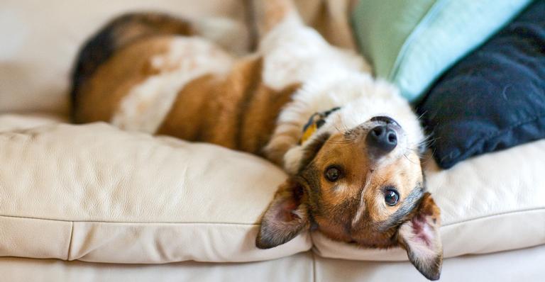 Mantenha sua casa limpa e cheirosa sem deixar seu animalzinho de lado