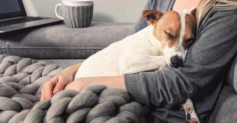 Cuidar dos seus pets e do meio ambiente ao mesmo tempo!