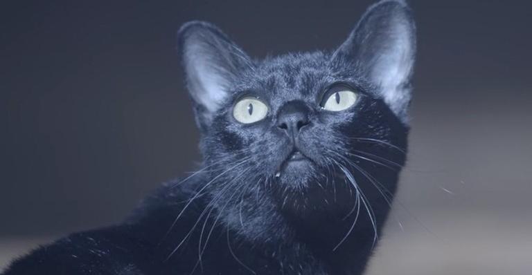 León revelará maldição que o transformou em gato para Gabriel