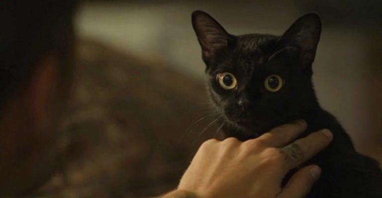 León é um gato místico que assume a forma humana na novela das nove.