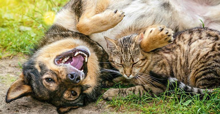 Queda das temperaturas e o ar mais seco deixam os pets vulneráveis a infecções, resfriados e gripes