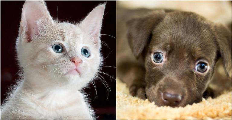 Apenas 450 mL de sangue pode salvar muitos cães e gatos vítimas de acidentes e doenças crônicas ou agudas